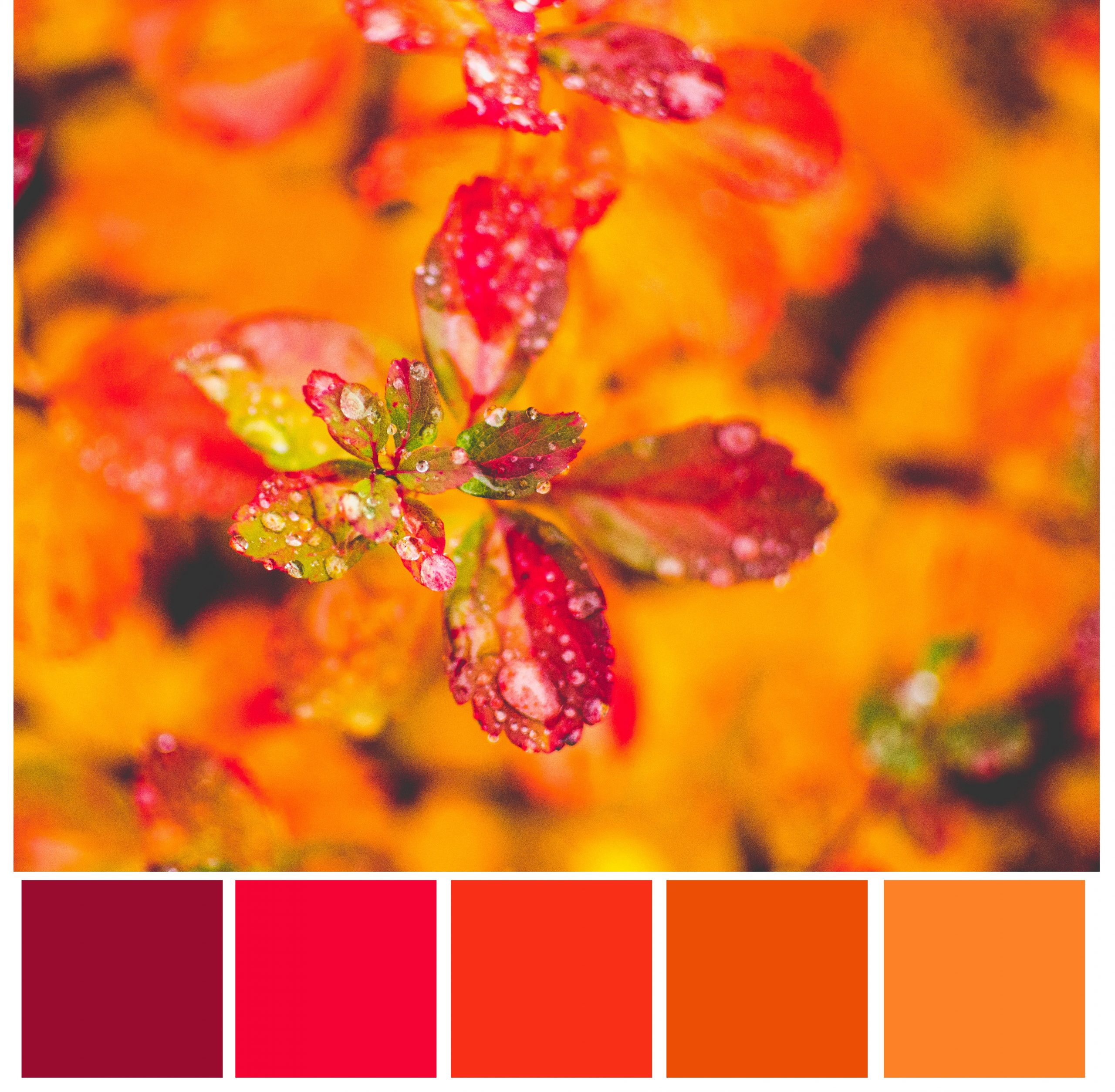 bright red orange color palette
