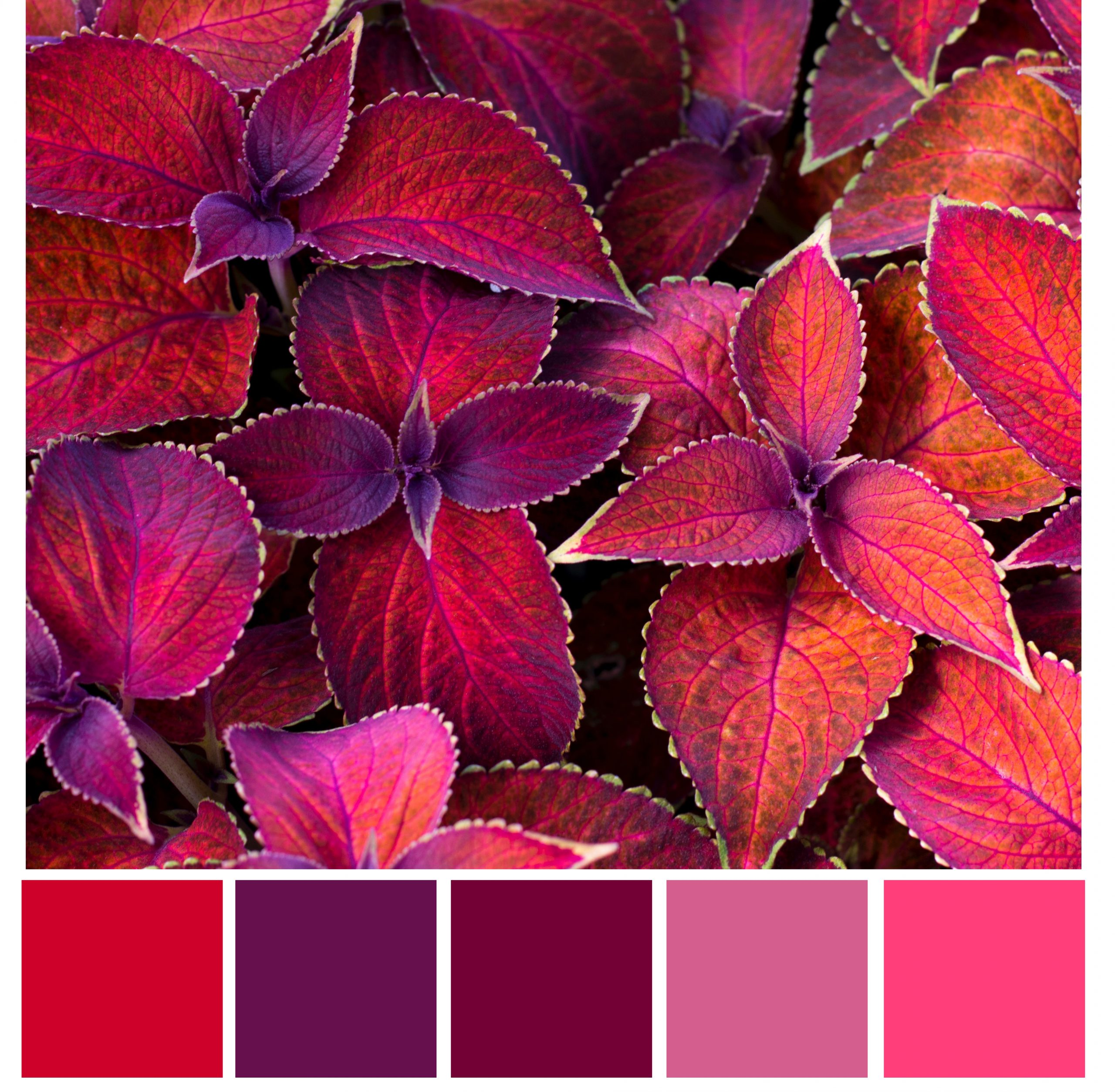 red violet color palette