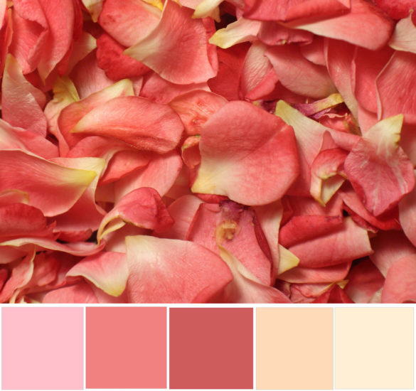 light coral color scheme with pink and yellows