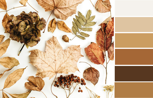 color palette brown, shades of brown, monochromatic color scheme, fall color palette, light brown color palette